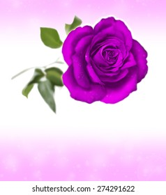 Single Purple Rose Greeting Invitation Card Design