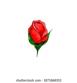 Single watercolor red rose bud isolated on white background.Hand drawn botanical illustration,floral element for birthday and holiday postcard,greetings,printable,pattern,embroidary,sticker,poster.
