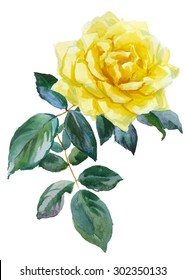 single yellow rose, watercolor, drawing on paper