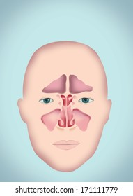 How to Clear Your Congestion Naturally (with the Neti Pot ... |Sutra Neti Sinus Cavity Diagram
