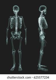 skeletal survey X-ray,  anatomy bone, 3d illustration, Xray skeletons, full body, green X ray film.