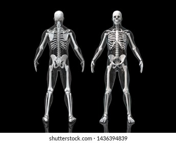 Skeleton bone structure in multiple views isolated -3d render