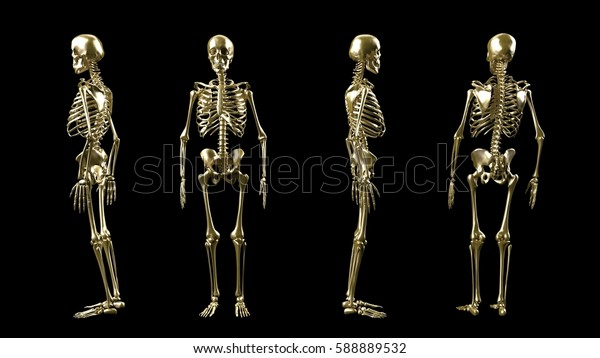 skeleton illustration form all sides painted in gold isolated on black background 3d rendering