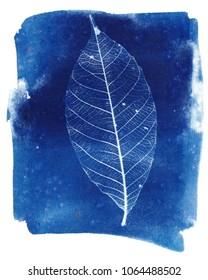 Skeleton leaf cyanotype