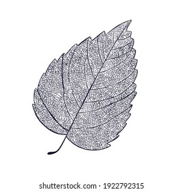 Skeleton of leaf isolated on a white background. High quality illustration