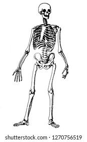 Skeleton painting isolated on white blackguard