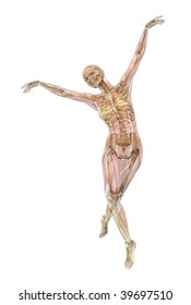 Skeleton with semi-transparent muscles, ballet pose - 3D render.