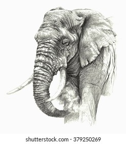 Sketch - African elephant on white background. Detailed pencil drawing