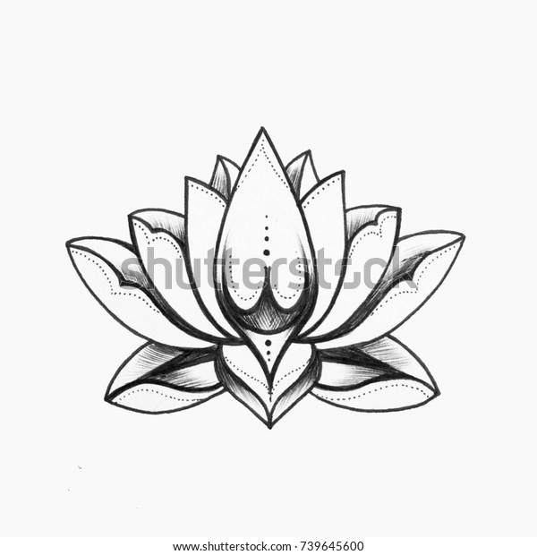Sketch Beautiful Black White Lotus Flower Stock Illustration 739645600