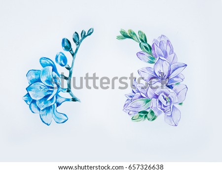 c0cfbed73 Sketch Beautiful Blue Violet Freesia On Stock Illustration 657326638 ...
