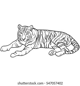 Sketch beautiful tiger on a white background. illustration.