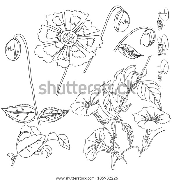 Sketch  with  bindweed and flowers. Raster illustration