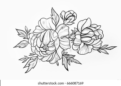 Sketch of branch of beautiful peonies on a white background.