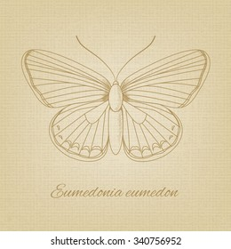 sketch of a butterfly on the background texture of the old paper.   old paper texture. Pencil sketches silhouette butterfly