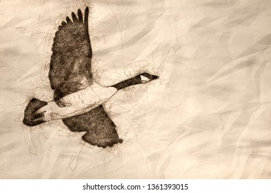 Sketch of a Canada Goose Flying in a Blue Sky