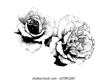 Contour Line Drawing Rose : Vector drawing bouquet outline rose flower stock royalty