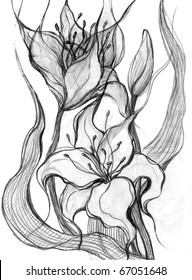 Sketch flowers lilies. Image I have created myself with pencil.