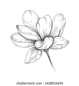 Sketch flower.Single hand-drawn black flower isolated on white background.
