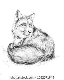 Sketch a fox,  black and white drawing. Furry fox