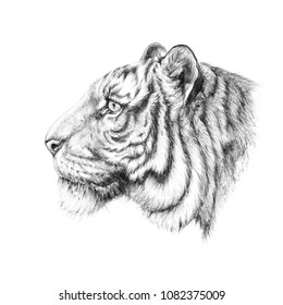 Sketch, graphics head of a tiger on the side of black and white pen graphics