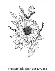 Sketch, hand-drawn plants, ink drawing. On a white background are flowers, leaves, sunflower.