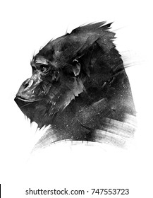 sketch head of a monkey gorilla on a white background