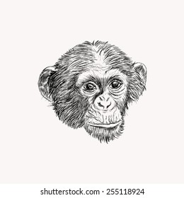 Sketch monkey face. Hand drawn doodle illustration.