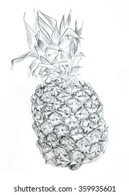 Sketch of pineapple pencil isolated on white