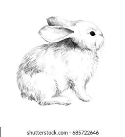 Sketch of a rabbit small furry pet pencil sketch 3