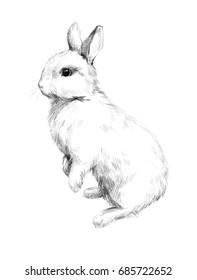 Sketch of a rabbit small furry pet pencil sketch 5