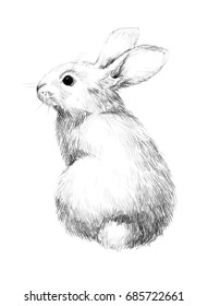 Sketch of a rabbit small furry pet pencil sketch 1