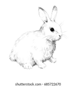 Rabbit Drawing Images Stock Photos Vectors Shutterstock