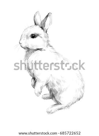 Sketch Rabbit Small Furry Pet Pencil Stock Illustration 685722652