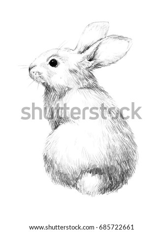 Sketch Rabbit Small Furry Pet Pencil Stock Illustration Royalty