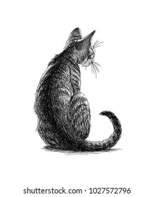 Sketch of a sitting kitten