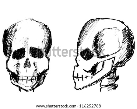 sketch skulls front view side view stock illustration royalty free