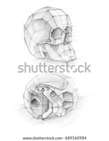 Sketch Soft Pencil Sketch Human Anatomy Stock Illustration Royalty