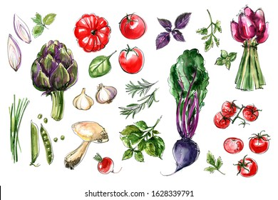 Sketch vegetables. Artichoke, beets, tomatoes, onions, garlic, herbs, peas