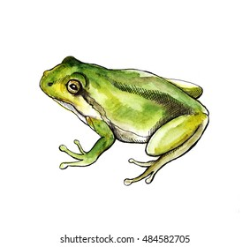 Sketch Watercolor green frog. Hand drawn illustration isolated on white background. Animal silhouette. Wildlife art.graphic for fabric, postcard, greeting card, book