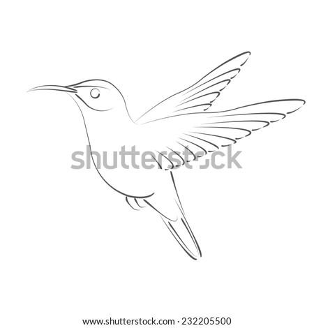 sketched hummingbird design template label banner stock illustration