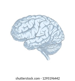 Sketchy style human brain abstract. Isolated on white background. Illustration