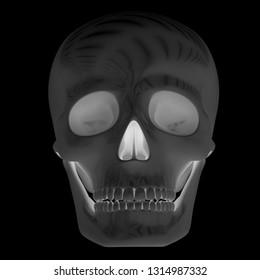 Skull. 3D Illustration.