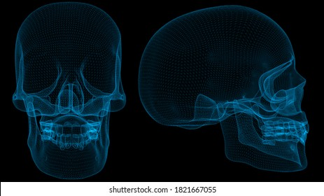 Skull 3d wireframe with thin blue lines. Anatomical futuristic hologram on black background. 3d illustration