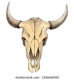 Skull of cow animal isolated. Watercolor background illustration set. Watercolour drawing fashion aquarelle isolated. Isolated skull illustration element.