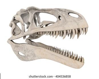 Skull of the dinosaur Acrocanthosaurus isolated on white background Computer generated 3D illustration