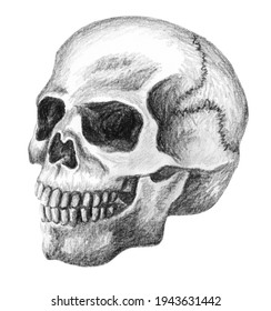 skull hand drawn in pencil drawing. human skull isolated on white in three-quarter perspective