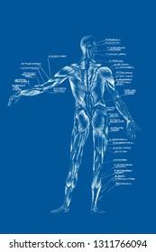 Skull illustration,Collection Of Hand Drawn Skulls, Hard Core Skull Art, blueprint pattern,t shirt design collection, whole body, blood circulation system, vascular system, hemal, anatomy, anatomical