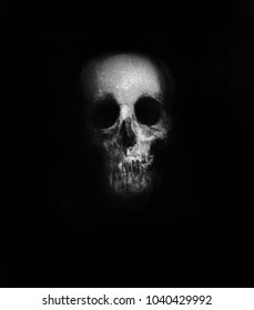 Skull isolated on black background, Scary horror wallpaper. Design for t-shirt print with skull.