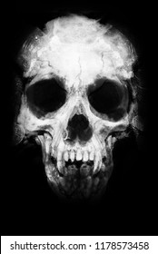 Skull isolated on black background. Scary halloween wallpaper. Design for t-shirt print with skull.