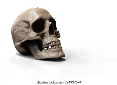 skull isolated in white background 3d illustration